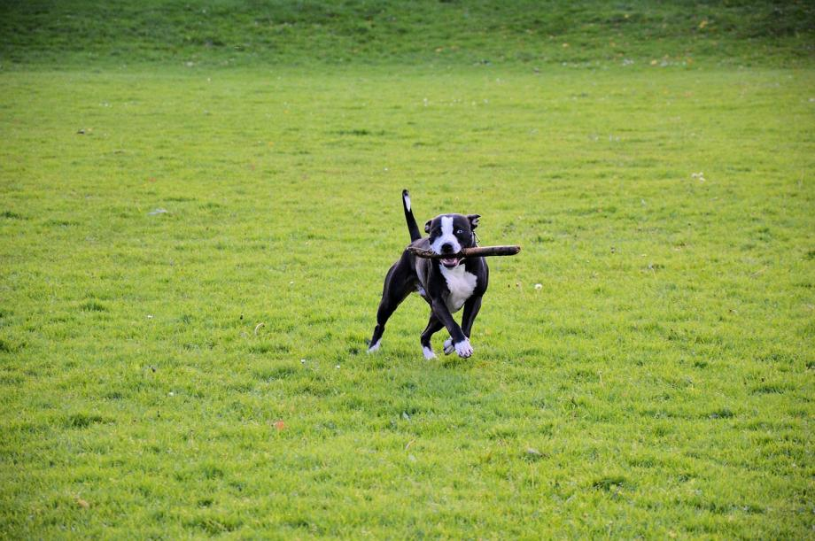 Dog Park on Frederick Campus Project - Dog in a dog park
