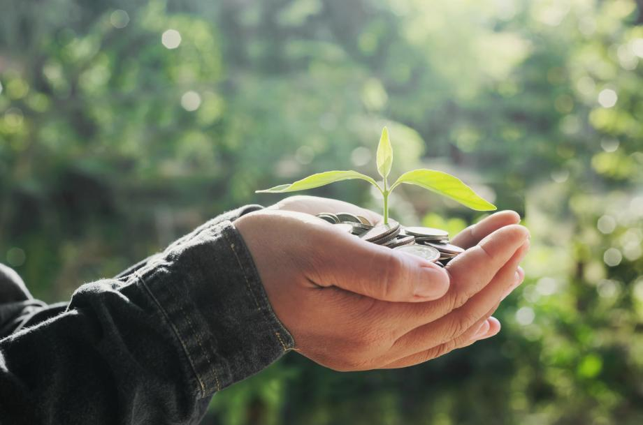 Plant growing from quarters held in hands